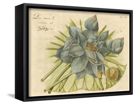 Blue Lotus Flower II--Framed Canvas Print
