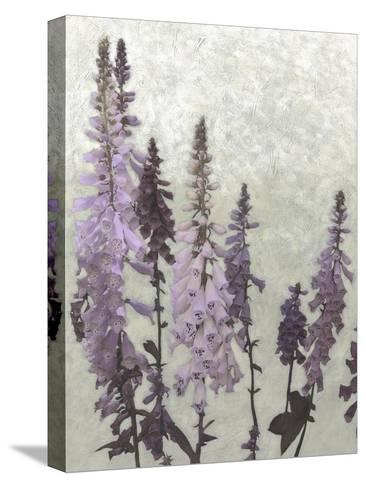 Non-Embellished Foxgloves II--Stretched Canvas Print