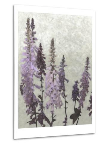 Non-Embellished Foxgloves II--Metal Print