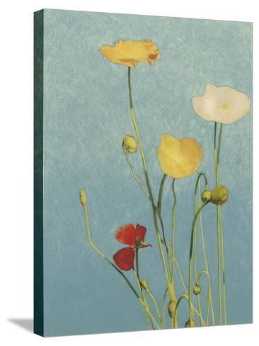 Non-Embellished Poppies I--Stretched Canvas Print