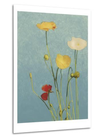 Non-Embellished Poppies I--Metal Print