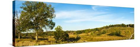 Trees on Hills, Little Round Top, Gettysburg, Adams County, Pennsylvania, USA--Stretched Canvas Print