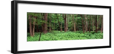 Forest, Adirondack Mountains, Old Forge, Herkimer County, New York State, USA--Framed Art Print