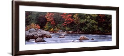 Trees Along a River, Moose River, Adirondack Mountains, New York State, USA--Framed Art Print