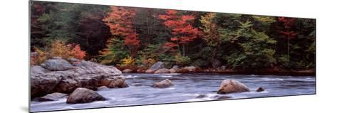 Trees Along a River, Moose River, Adirondack Mountains, New York State, USA--Mounted Photographic Print