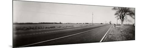 Tree at the Roadside, Maryland, USA--Mounted Photographic Print
