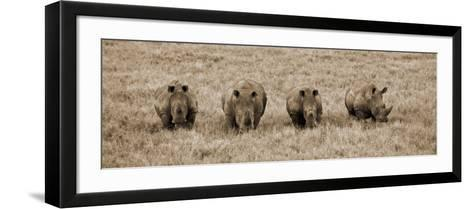 Kenya, Laikipia, Lewa Downs; a Group of White Rhinoceros Feed Together-John Warburton-lee-Framed Art Print