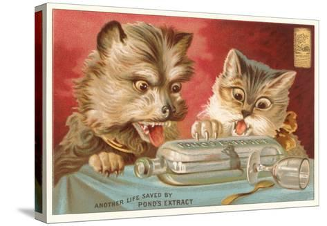 Shocked Victorian Cat and Dog--Stretched Canvas Print