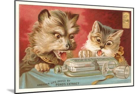 Shocked Victorian Cat and Dog--Mounted Art Print