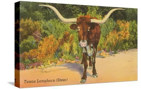 Texas Longhorn Steer--Stretched Canvas Print