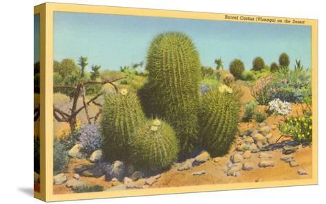Barrel Cactus--Stretched Canvas Print
