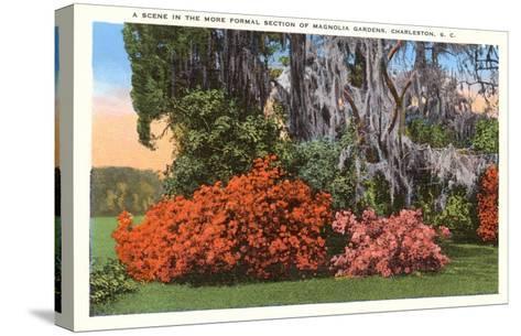 Magnolia Gardens, Charleston, South Carolina--Stretched Canvas Print