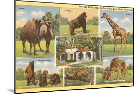 Scenes of Animals from Zoo, San Diego, California--Mounted Art Print