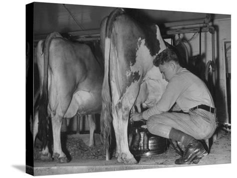 A Boy Milking a Cow--Stretched Canvas Print