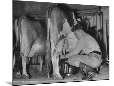 A Boy Milking a Cow--Mounted Photographic Print