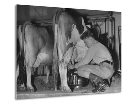 A Boy Milking a Cow--Metal Print