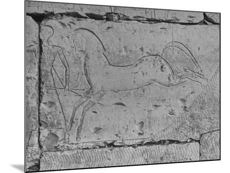 Carving of a Horse on Wall of Temple of Ramses II at Abydos--Mounted Photographic Print