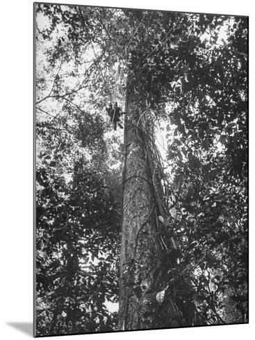 Rain Forest, Suriname, Duth Guiana--Mounted Photographic Print