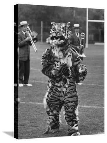 The Princeton Mascot, a Tiger--Stretched Canvas Print