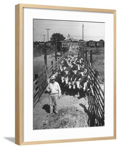 Cattle Being Herded by Farm Workers--Framed Art Print