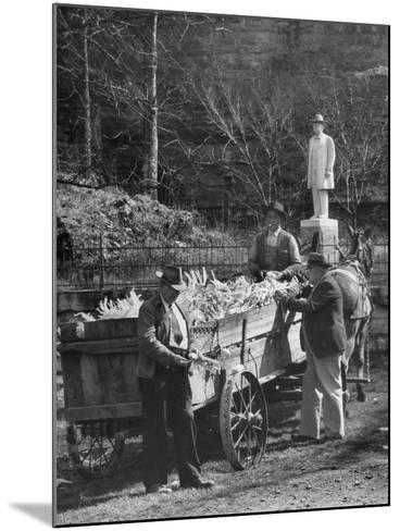 Reagor Motlow and Jess Motlow, Present Owners of Jack Daniels Distillery, Looking over Corn--Mounted Photographic Print