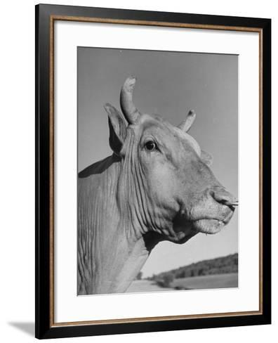 A View of a Bull on a Farm--Framed Art Print