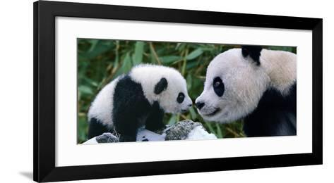 Panda Bear With Cub-Steve Bloom-Framed Art Print