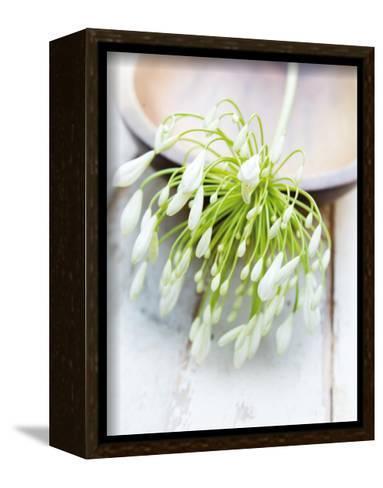 White Still Life I-Ian Winstanley-Framed Canvas Print