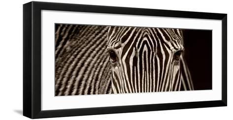 Zebra Grevy-Marina Cano-Framed Art Print