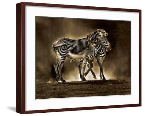 Zebra Grevys-Marina Cano-Framed Art Print