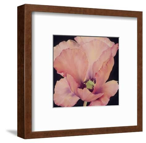 Delicate Pink Poppy-Maggie Thompson-Framed Art Print