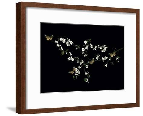 Blossom & Butterflies-Ian Winstanley-Framed Art Print