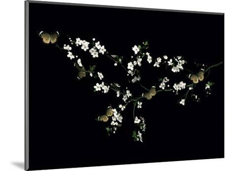 Blossom & Butterflies-Ian Winstanley-Mounted Giclee Print