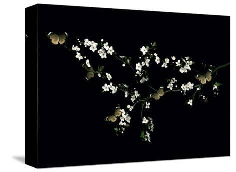 Blossom & Butterflies-Ian Winstanley-Stretched Canvas Print
