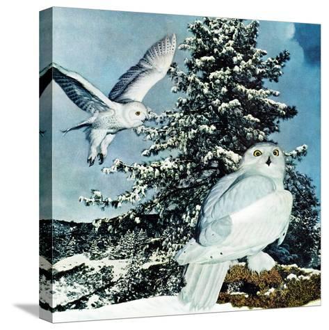"""Snowy Owls"", September 14, 1957-D. Bleitz-Stretched Canvas Print"