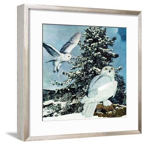 """""""Snowy Owls"""", September 14, 1957-D. Bleitz-Framed Art Print"""