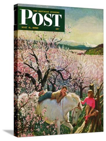 """Apple Blossom Time"" Saturday Evening Post Cover, May 6, 1950-John Clymer-Stretched Canvas Print"