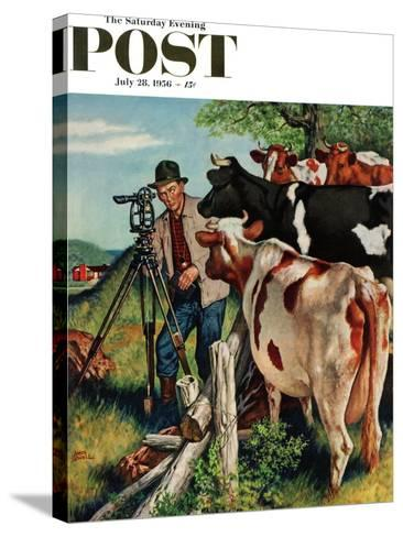"""Surveying the Cow Pasture"" Saturday Evening Post Cover, July 28, 1956-Amos Sewell-Stretched Canvas Print"