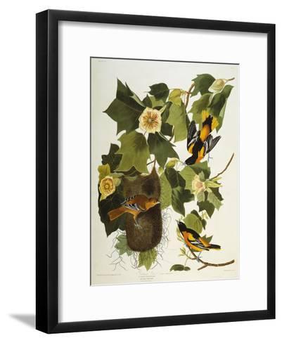 Baltimore Oriole. Northern Oriole (Icterus Galula), from 'The Birds of America'-John James Audubon-Framed Art Print