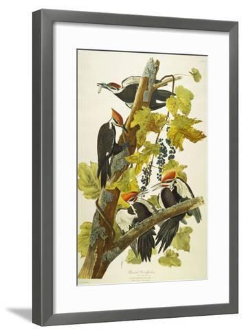 Pileated Woodpecker (Dryocopus Pileatus), Plate Cxi, from 'The Birds of America'-John James Audubon-Framed Art Print