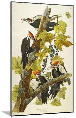 Pileated Woodpecker (Dryocopus Pileatus), Plate Cxi, from 'The Birds of America'-John James Audubon-Mounted Giclee Print
