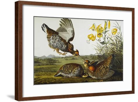 Pinnated Grouse. Greater Prairie Chicken (Tympanuchus Cupido), from 'The Birds of America'-John James Audubon-Framed Art Print