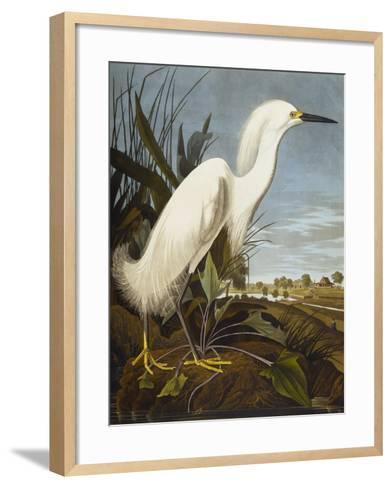 Snowy Heron or White Egret / Snowy Egret (Egretta Thula), Plate CCKLII, from 'The Birds of America'-John James Audubon-Framed Art Print