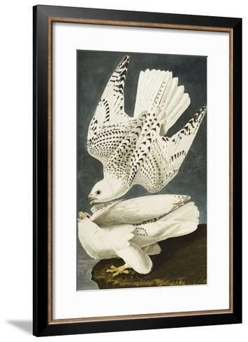 Iceland or Jer Falcon. Gyrfalcon (Falco Rustiocolis), from 'The Birds of America'-John James Audubon-Framed Art Print
