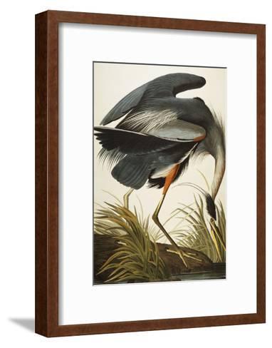 Great Blue Heron (Ardea Herodias), Plate Ccxi, from 'The Birds of America'-John James Audubon-Framed Art Print