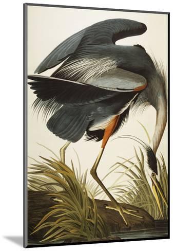 Great Blue Heron (Ardea Herodias), Plate Ccxi, from 'The Birds of America'-John James Audubon-Mounted Giclee Print