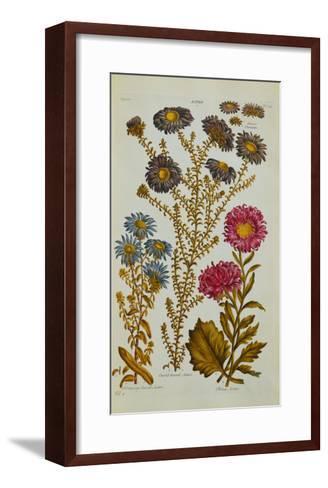 The Vegetable System: Aster-John Hill-Framed Art Print