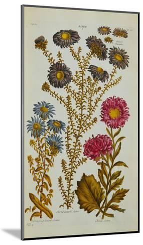 The Vegetable System: Aster-John Hill-Mounted Giclee Print