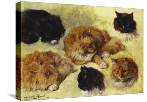 Studies of Cats-Henriette Ronner-Knip-Stretched Canvas Print