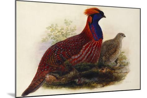 Temminck's Tragopan (Ceriornis Temminckii)-Henry Constantine Richter-Mounted Giclee Print